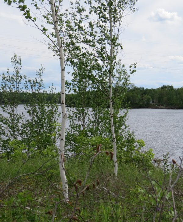 Grand_Lake_Waterfront_property_for_sale_NB