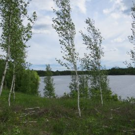 waterfront_property_for_sale_in_new_brunswick
